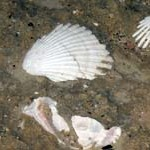 mitata, kythera, cythera, κύθηρα, shell